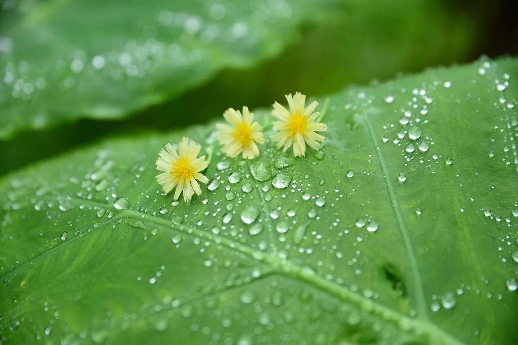 今日雨水丨雨�^便是芳菲十里