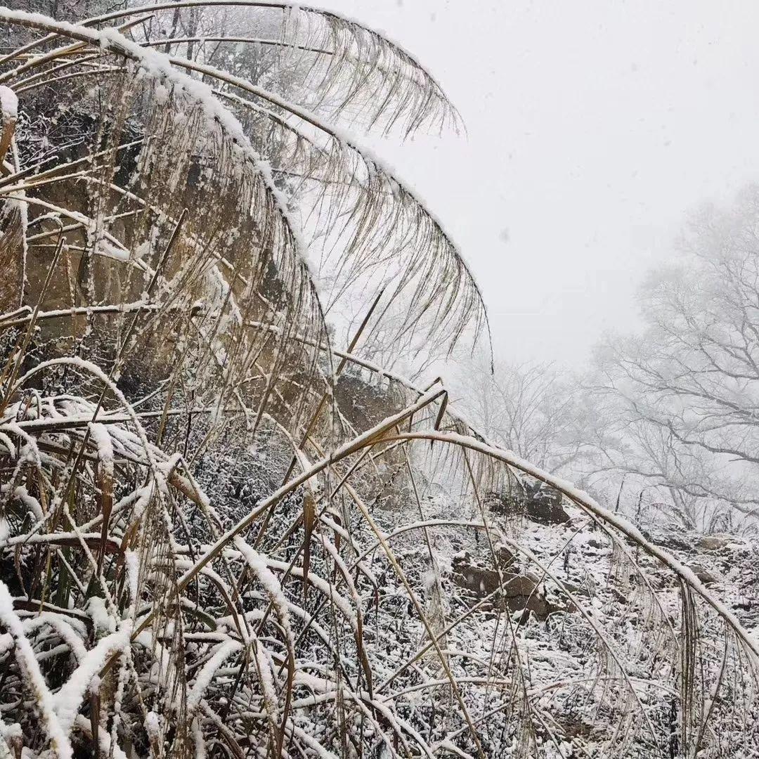 霍邱��h突降暴雪!�l�公交停�\,一群人火爆朋友圈!