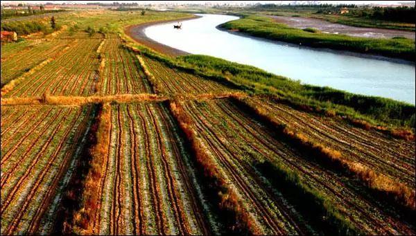 投资100万元!2020沾化农田将迎来大发展!下个月开始