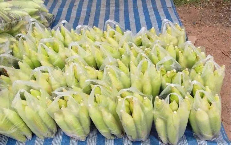 新鲜的玉米怎么才能久放营养不流失?