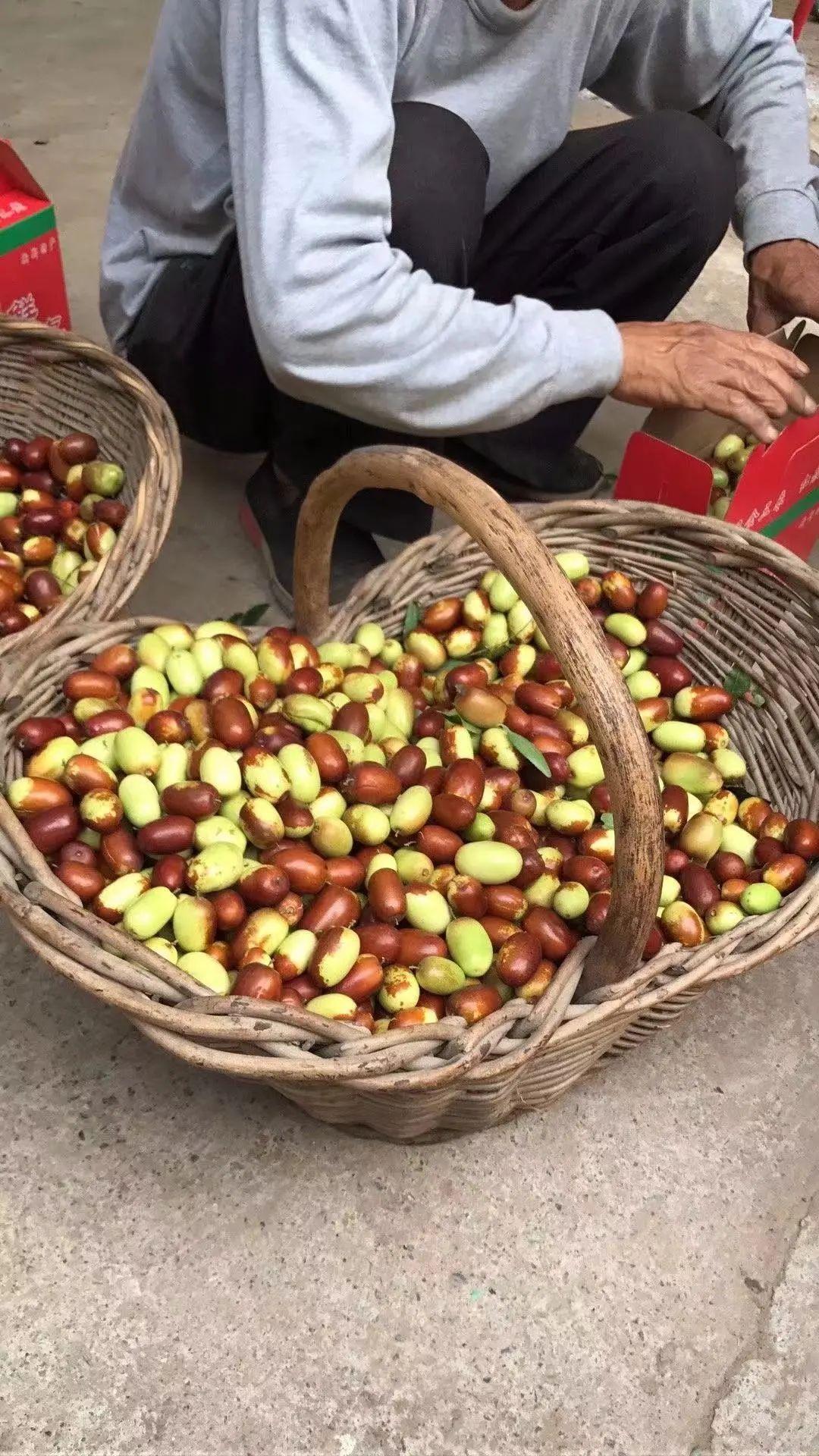 新郑一农户10多亩大灰枣滞销,卖不了就坏掉了!
