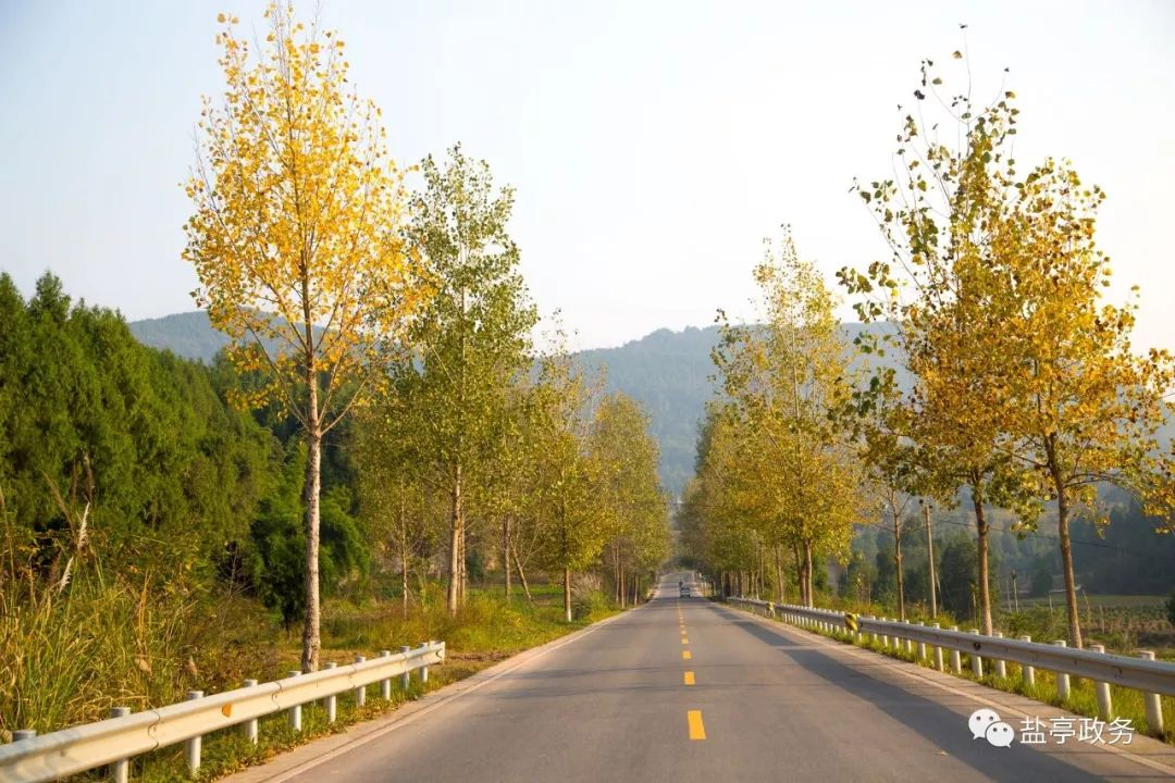 乡村振兴在路上!盐亭这些乡镇、村子、现代农业园区被评为先进!厉害!