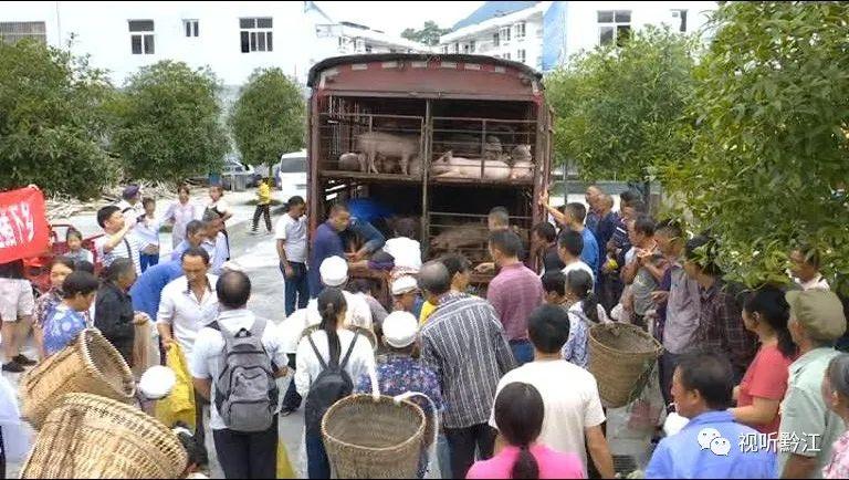 8月20日,由黔江区畜牧发展中心指导,重庆市六九畜牧科技股份有限公司提供了69头猪仔送给了黎水
