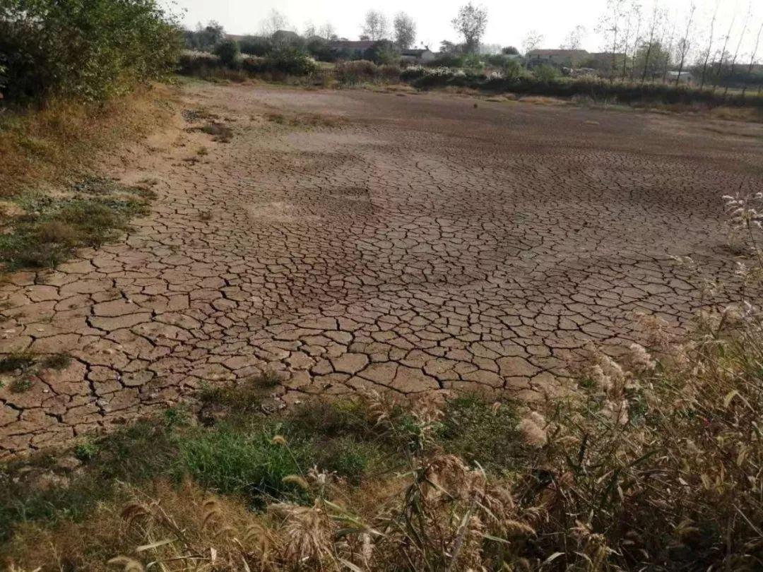 紧急扩散!重旱!特旱!安徽为何久旱无雨?专家说……
