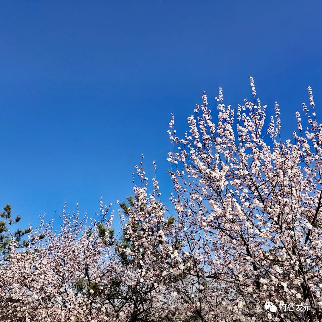神龙山景区:春暖花开好时光