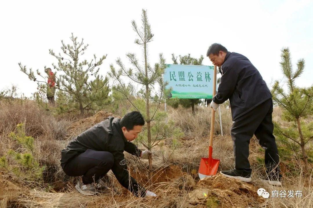 民盟府谷支部开展义务植树活动