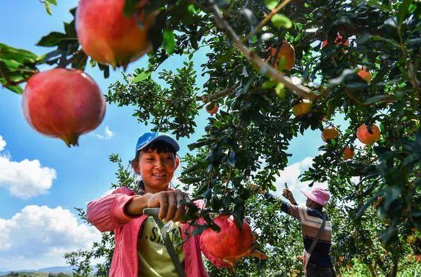 这个国庆假期,咱老家河南不但农特产受欢迎,还是出行紧俏目的地