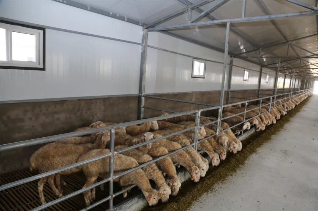 投�Y15� 元!榆��^建成首��湖羊�B殖示范基地
