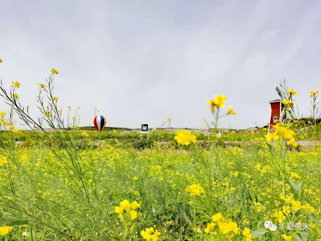 府谷县农业农村局的这一年,谱写新篇章、追梦新征程!