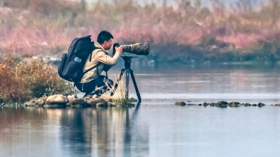 """濒危物种现身霍山湿地,被称为""""鸟中大熊猫""""!"""