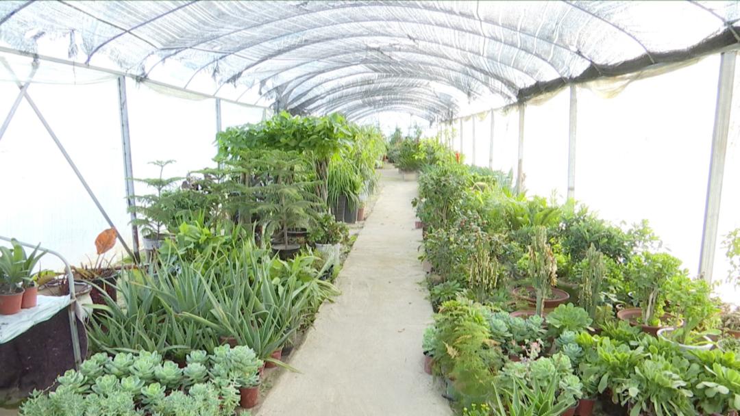 ��桥区:立足花卉产业优势 实现乡村振兴新突破