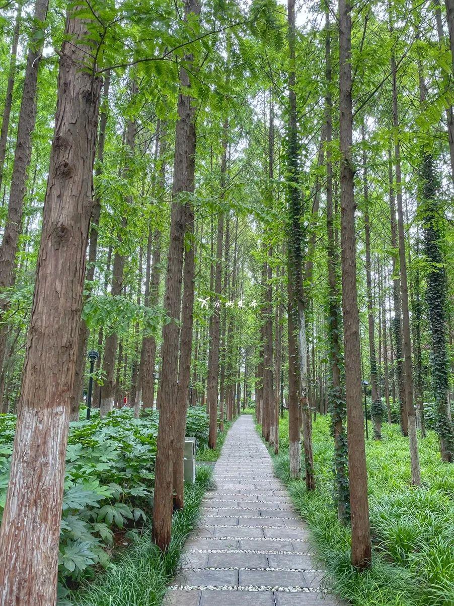 """宿州一公园惊现""""活化石""""树种!"""