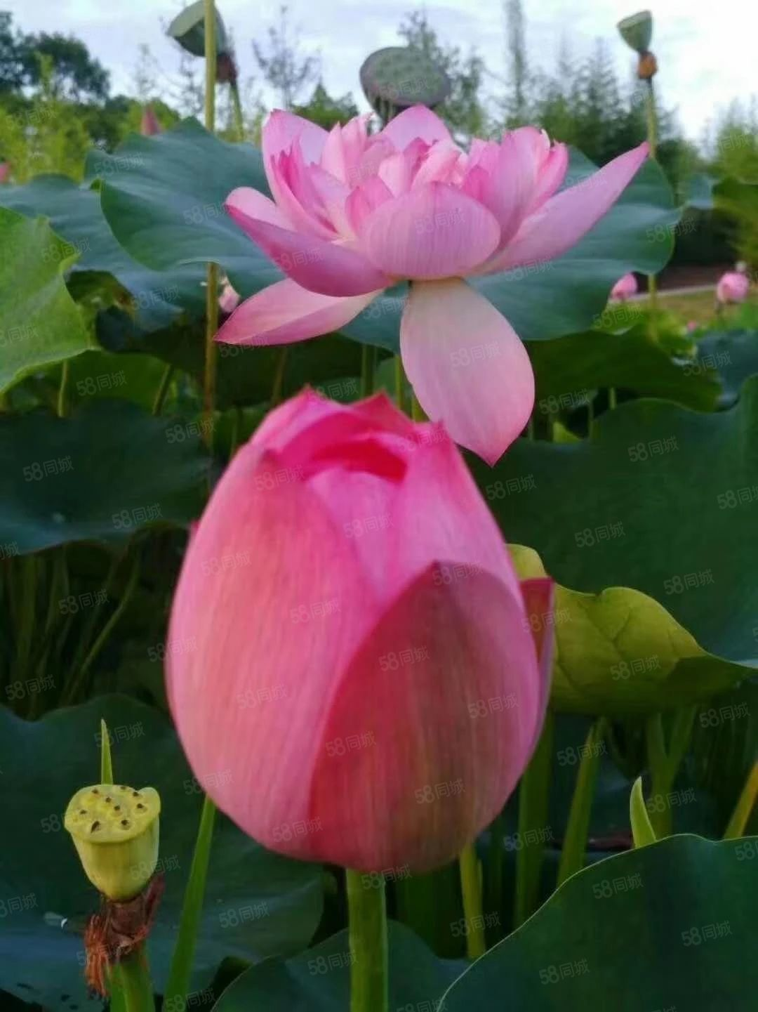 急售仁湖花园清水三室双证齐全全款可优费赠送一花园四十平米