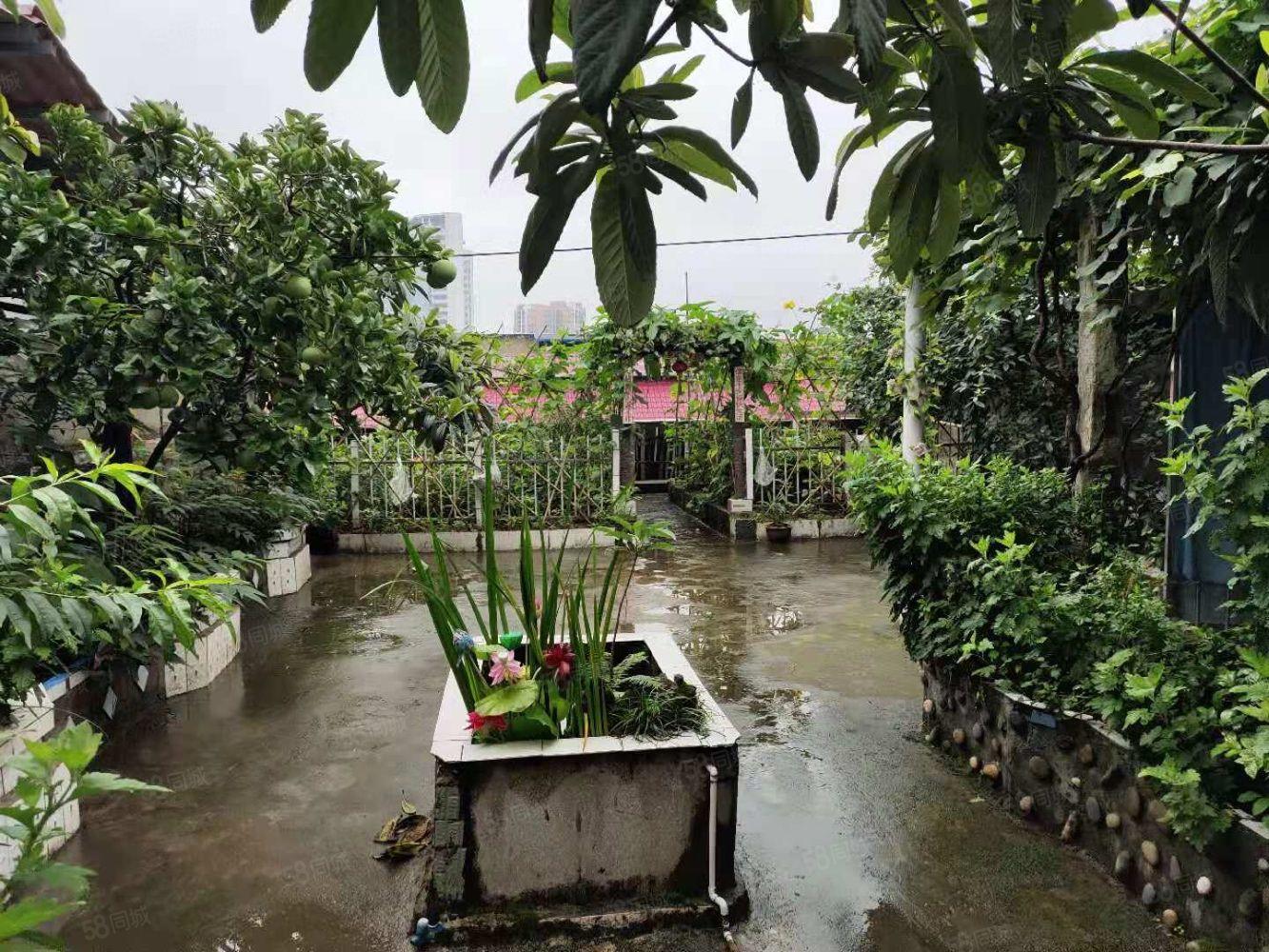 新搖籃對面超大三房帶樓頂花園有果樹有菜地因有盡有巴適慘了