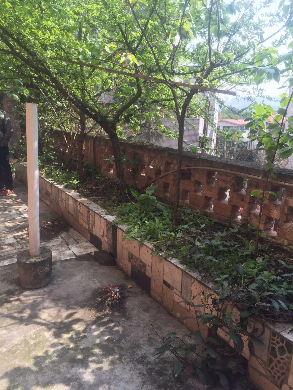 西路学校附近一楼带大水果花园中装四室三厅2卫