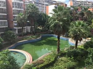 未来城楼.王中庭花园全新房价可谈游泳池单价7千多