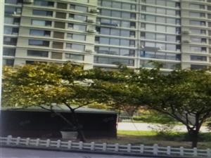 永盛紫金苑,大4居电梯,包配套包改名,带地下室,急售价低