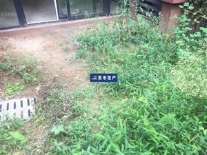 好房子出来了带前后花园的洋房品质生活单价只要五千多