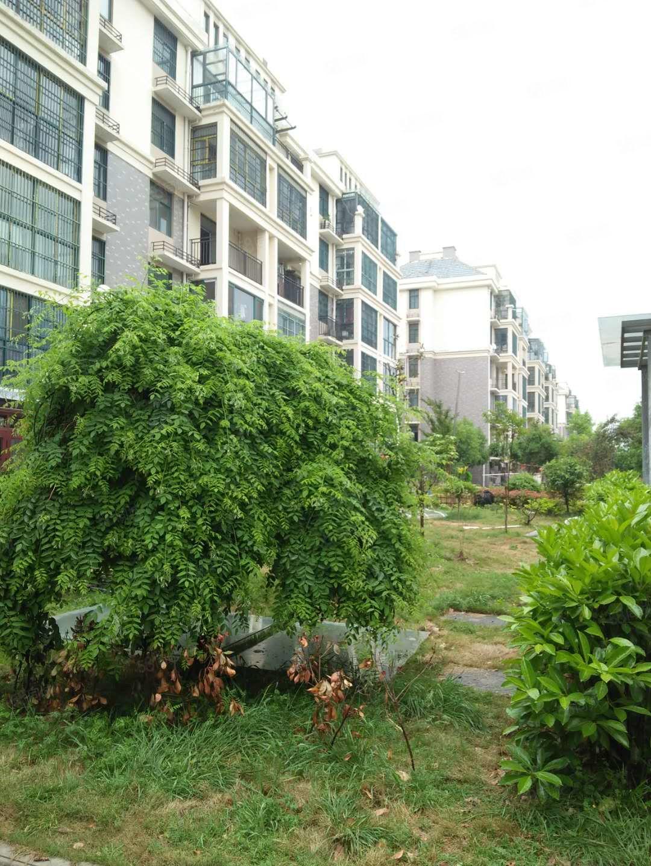 城市花園二期大三房特價急售滿五唯一玉泉學區